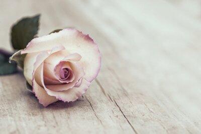 Naklejka vintage Rose