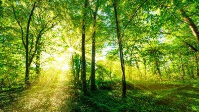 Naklejka Wald Panorama im goldenen Sonnenschein