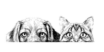Naklejka Wall sticker. Graphic, artistic, sketch drawing of a cat and a dog looking at a table on a white background.