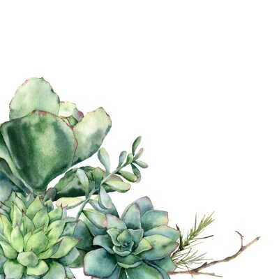 Watercolor card with bouquet of succulents and coniferous branch. Hand painted green and violet cacti isolated on white background. Floral illustration for design, fabric, print or background.