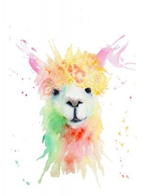 Naklejka watercolor drawing of an animal - alpaca, drops, splashes