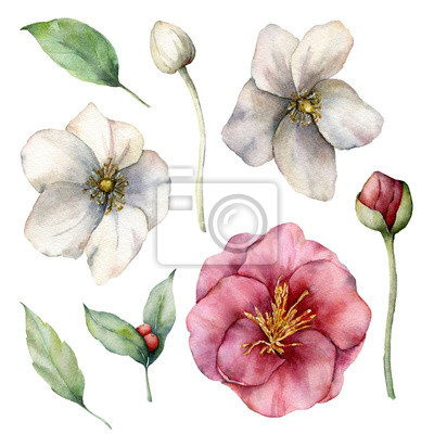 Watercolor floral set with pink and white anemones. Hand painted flowers, buds and leaves isolated on white background. Spring illustration for design, print, fabric or background.