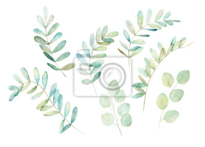 Watercolor greenery set. Botanical winter illustration with eucalyptus branch. Vintage hand drawn print
