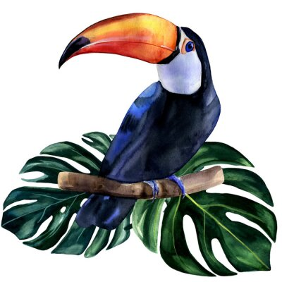 Naklejka Watercolor hand painted colorful realistic illustration of toucan bird with monstera leaves. Bright tropical composition is perfect for invitation for thematic wedding or party.