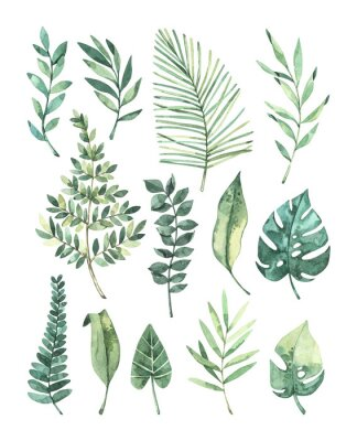 Naklejka Watercolor illustration. Summer tropic design elements. Tropical palm leaves (monstera, areca, fan, banana). Perfect for invitations, prints, packing, fabric, textile, wrapping paper