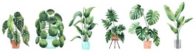Naklejka Watercolor image with tropical leaves and leaves of indoor plants. Home plant in pots. Greenery. Juicy. Floral design element. Perfect for invitations, cards, prints, posters.