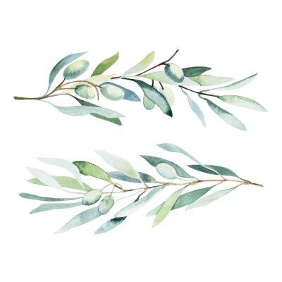 Naklejka Watercolor olive branch. Sketch of olive branch on white background