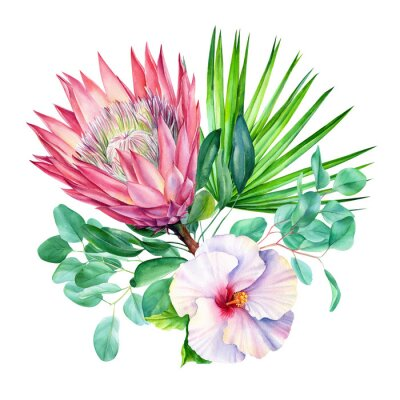 Naklejka Watercolor protea flower, isolated on white background. Botanical illustration. Hand painted watercolor.