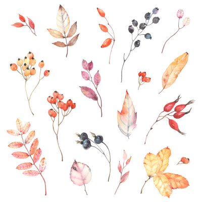 Naklejka Watercolor set of branches with berries dog rose, rowan and colorful leaves. Autumn illustration isolated on white background, decoration collection for your design.