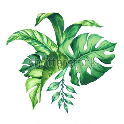 Naklejka watercolor tropical green leaves, isolated on white background