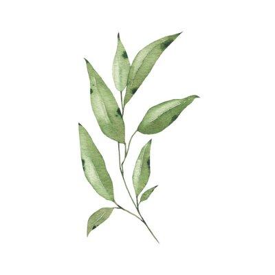 Naklejka Watercolor tropical greenery floral leaf plant forest herb spring