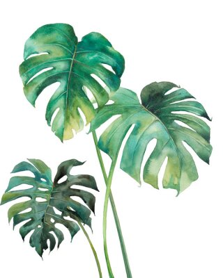 Naklejka Watercolor tropical leaves poster. Hand painted exotic green branches isolated on white background. Summer plants illustration