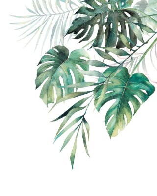 Naklejka Watercolor tropical leaves poster. Hand painted exotic monstera and palm green branches composition on white background. Summer plants illustration
