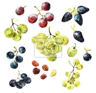 Naklejka Watercolour illustrations of delicious grape berries