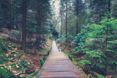 Naklejka wędrówki ścieżką wewnątrz krajobrazu leśnego