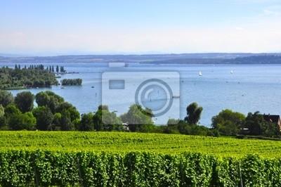 Weinanbau am Bodensee