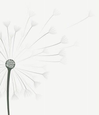 Naklejka Wektor kwiatów mniszka lekarskiego