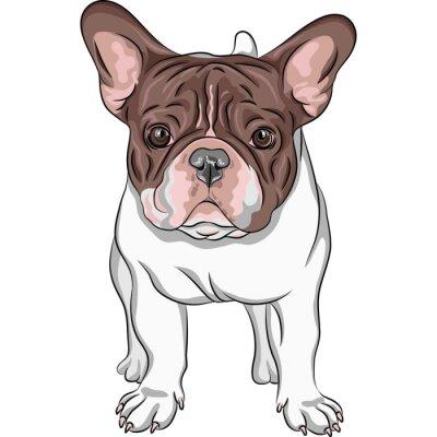 Naklejka wektor szkic Buldog francuski pies rasy