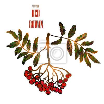 Wektor vintage, ilustracja z czerwonej jarzębiny