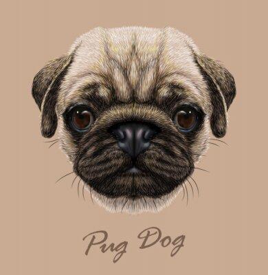 Naklejka Wektor Zdjęcie Portret Pug pies.