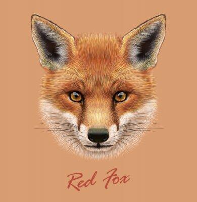 Naklejka Wektor Zdjęcie portret Red Fox