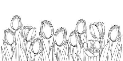 Naklejka Wektorowa horyzontalna granica z konturów tulipanowymi kwiatami, pączkiem i ozdobnymi liśćmi w czerni odizolowywającym na białym tle ,. Kontur tulipany na powitanie projekt wiosny lub kolorowanka.