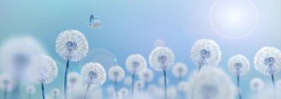 Naklejka white dandelions on blue background