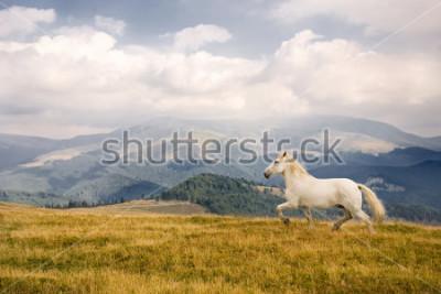 Naklejka White horse