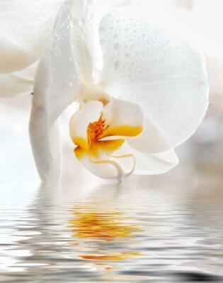 Naklejka White Orchid. Zbliżenie z odbicia w wodzie.