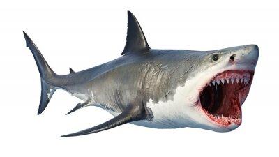 Naklejka White shark marine predator big open mouth. 3D rendering