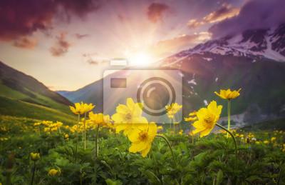 Wibrujący góra krajobraz z żółtymi kwiatami na przedpolu przy zmierzchem w Svaneti regionie Gruzja. Kolorowy niebo nad górami i kwiatami na zielonej łące. Jasne promienie słońca nad górą. Promienie sł