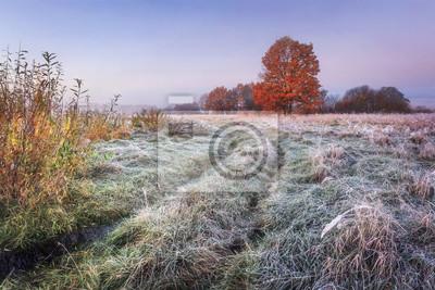 Wibrujący jesień natura krajobraz. Trawiasta łąka z hoarfrost i kolorowymi drzewami z czerwonym ulistnieniem na horyzoncie w jesień jasnym ranku. Sceniczny widok na listopad dzikiej naturze. Niesamowi