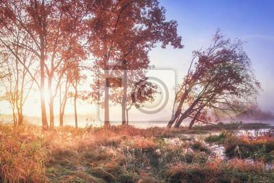 Wibrujący scenerii jesieni krajobraz na rzecznym brzeg z żywymi sunbeams przez drzew. Spadek. Niesamowita kolorowa jesień natura. Czerwony ulistnienie na drzewach w Października jasnym ranku
