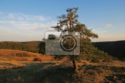 Wiecznie zielone drzewo w jesiennym krajobrazie.