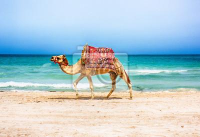 Naklejka Wielbłąda na plaży