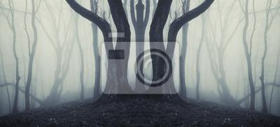 wielkie drzewa w tajemniczym lesie z mgły po deszczu