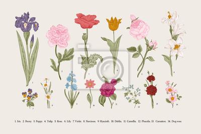 Wiktoriańskie kwiaty ogrodowe.