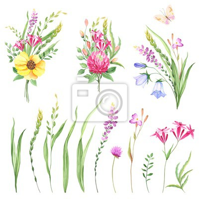 Wildflowers set with bouquets and design elements meadows. Floral collection of flowers, grasses, leaves and branches. Vector illustration in watercolor style on white background.