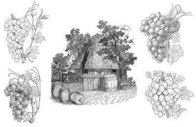 Naklejka Winnica ilustracji