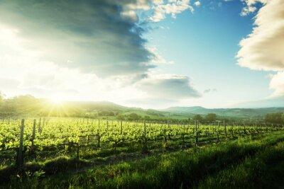 Naklejka Winnica w Toskanii we Włoszech