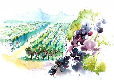 Naklejka winnice