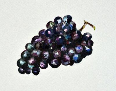 Naklejka winogrona akwarela