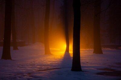 winter forest at night illuminated by orange searchlight in the background, Kharkiv, Ukraine