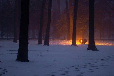 winter forest in the night with bright ray of light near world war 2 memorial, Kharkiv, Ukraine