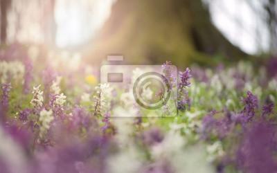 wiosenne kwiaty w kolorowym lesie o zachodzie słońca