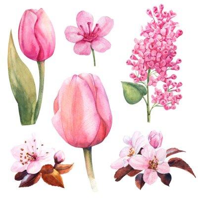 Naklejka wiosenny kwiat akwarela z tulipanem i bzem