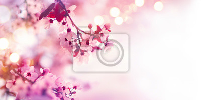Wiosna kwiat granicy z różowym drzewa kwitnące