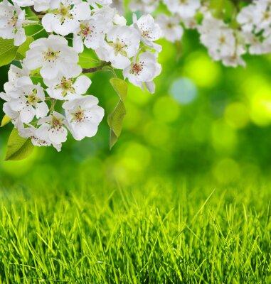 Naklejka Wiosna kwiat i trawy