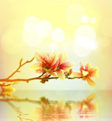 Naklejka Wiosna kwiat magnolii tle