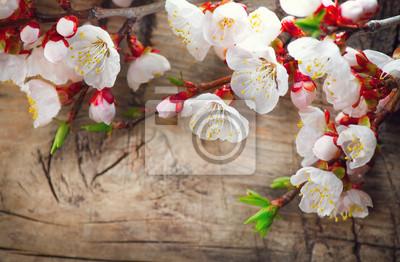 Wiosna kwiat na tle drewniane. Kwitnące kwiaty morelowe